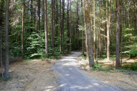 Muller Hill State Forest accessible trail