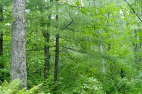 Tioughnioga Forest