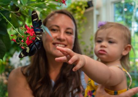 hershey-gardens-butterfly-butterflies