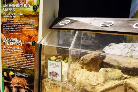 Exploring the element of Earth at the Rochester Museum & Science Center