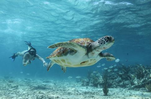 Sea Turtles Cancun Adventures