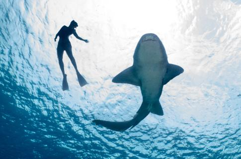 Everybody Loves Rays & Sharks!