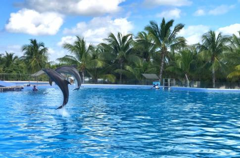 Dolphin Discovery Playa del Carmen