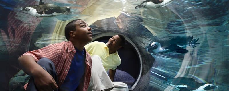 Ripley's Aquarium Penguin Experience