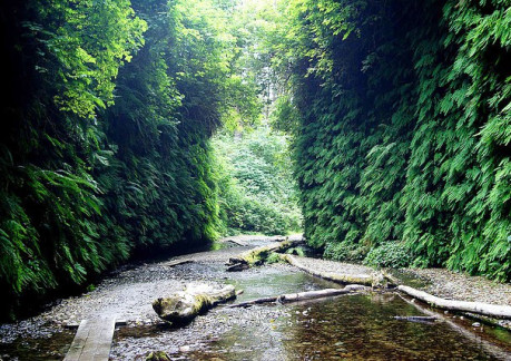 476P3Fern Canyon.jpg