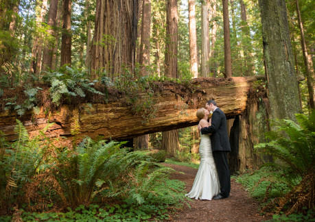 weddings in redwood national