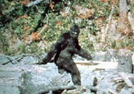 Screen Shot of the Patterson-Gimlin Bigfoot