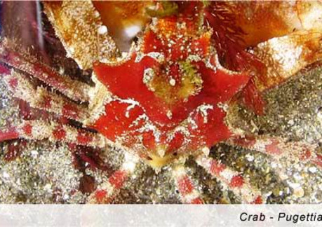 2815P3Crab.jpg