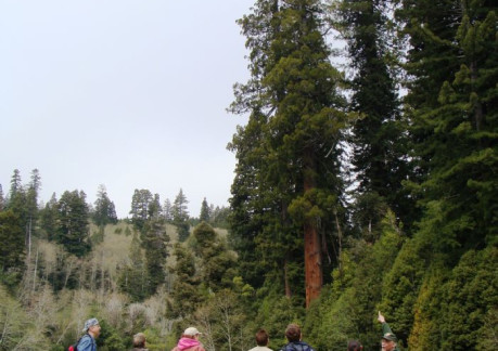 3950P3Ranger Jim with park visitors at the Tall trees grove.jpg