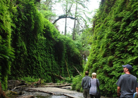 3997P3Fern Canyon in Redwood National Park Photo courtesy of Redwoods.info.jpg
