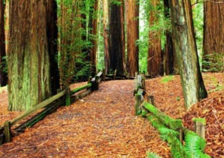 485P3photos_485Prichardson grove.jpg
