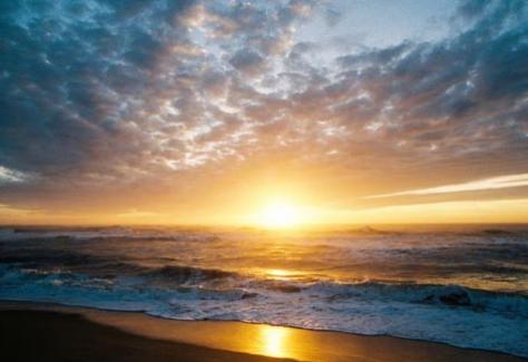 1431437102.hV8z.NCBI-Beach1-700x467.jpg