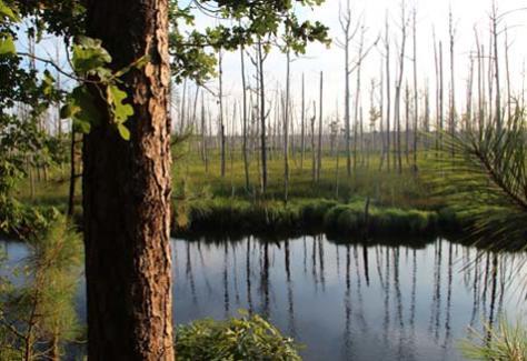 1440786696.oM8U.Brunswick-Nature-Park.jpg