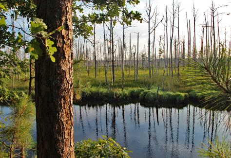 Brunswick Nature Park 005 crm