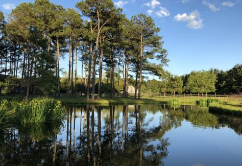 greenlands_farm_pond