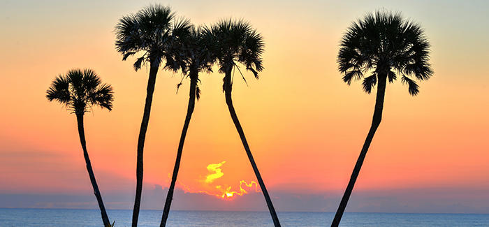 Palm Trees at Sunset on the River