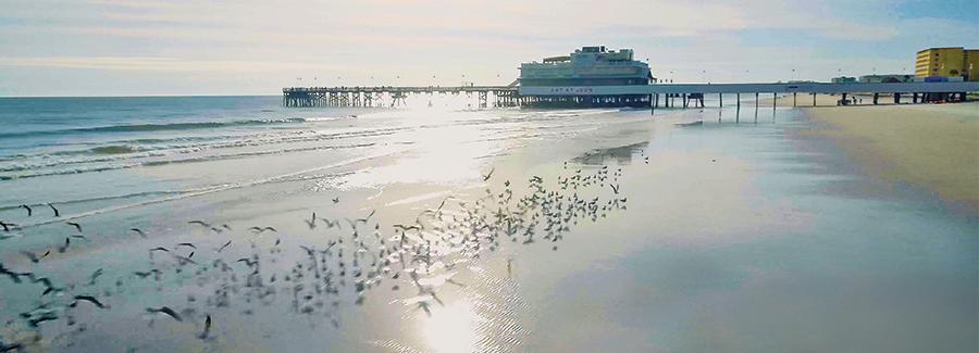 Birds along the shoreline near the Daytona Beach Pier