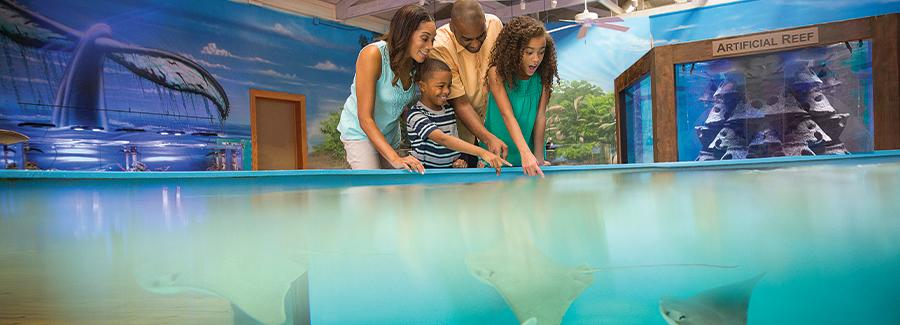 A family enjoys seeing and petting sting rays at the Marine Science Center in Ponce Inlet