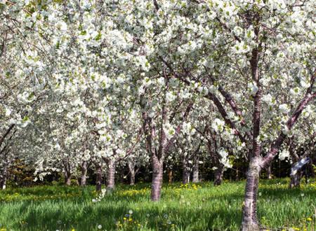 Leelanau Peninsula Orchard