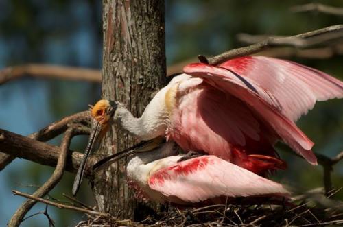 Grosse-Savanne-Birding-Eco-Tours.jpg