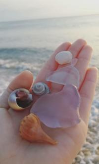 Where To Find Rare Obx Sea Glass