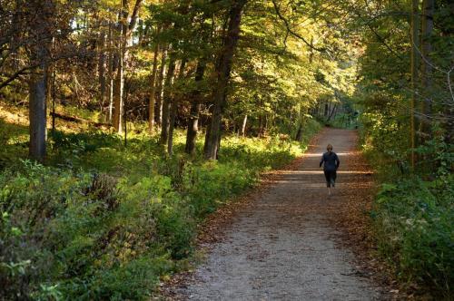 Nichols Arboretum Fall
