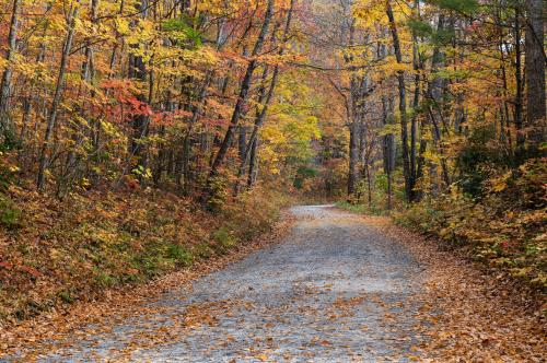 An inviting gravel road in Pisgah National Forest is adorned with fall color