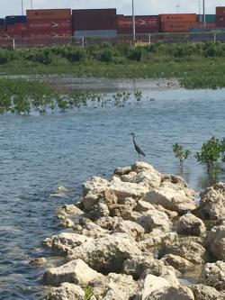bird in mangroves