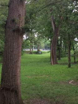 Elmwood Park Norton