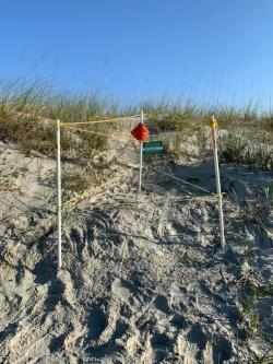 Sea turtle nest, Myrtle Beach, SC