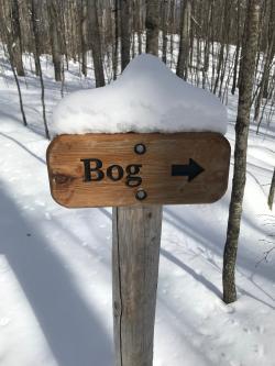 Kettles Trail Bog