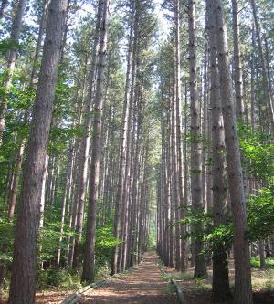 cumming-nature-center-naples-trees-hiking