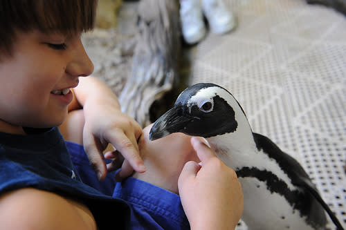Kid Petting a Penguin