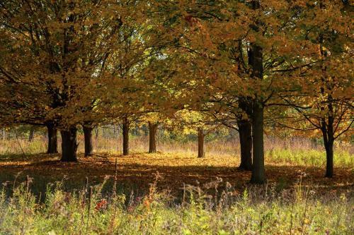 Matthaei Botanical Gardens Fall