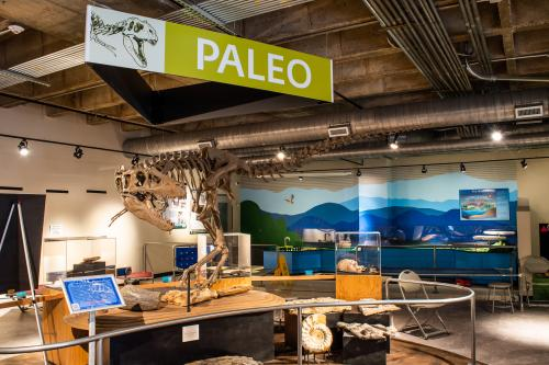 The Asheville Museum of Science is a fully interactive science experience in downtown Asheville, N.C.