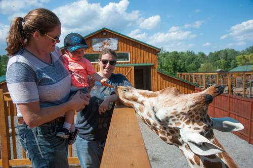 Feeding the giraffe at the Wild Animal Park