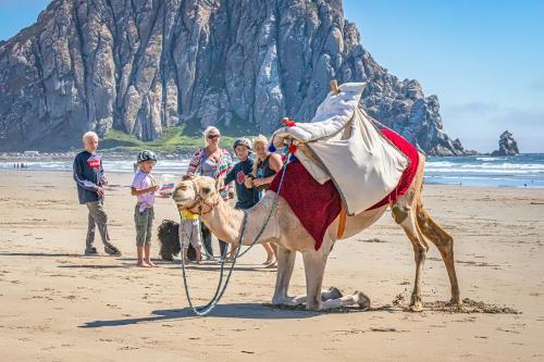 Camel kneeling on beach
