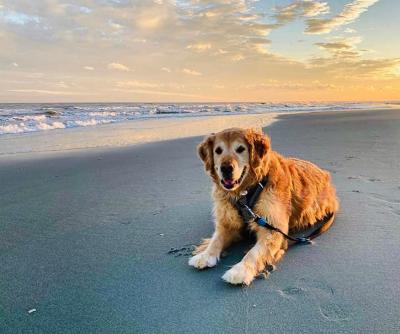 Dog laying on the beach