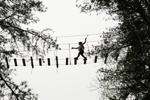 Treetop Quest Silhouette