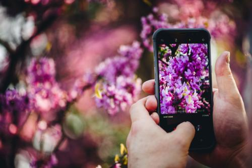 Visitor Taking Photo of Lilac Flowers on a Smart Phone