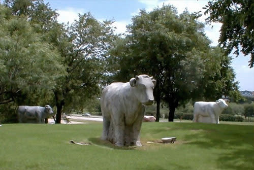 Marble Cows