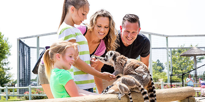 A family of 4 interact and feed a couple lemurs at Tanganyka Wildlife Park