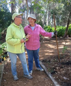 L to R: Lois Cantwell, president of the Mangrove Chapter of the FNPS and Gail Finney, Garden Chairperson take a break from gardening to smile at the camera. Photo by C. Gregsak