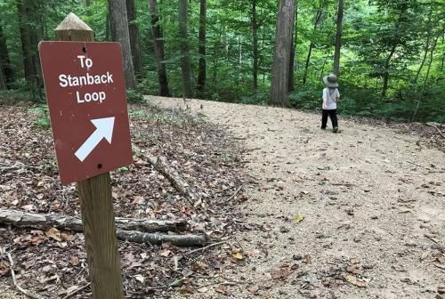 Stanback Loop