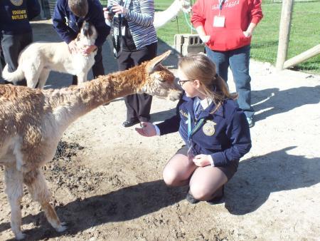 FFA group tour at Montrose Farms Alpaca Ranch