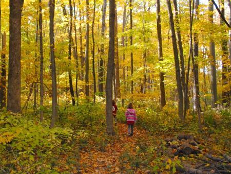 Burnett Woods Nature Preserve in Avon