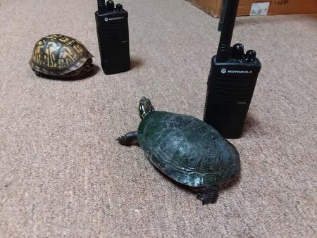 Turtles at McCloud Nature Park