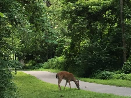Deer at Arbuckle Acres