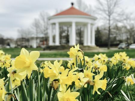 Newport Daffodil Days