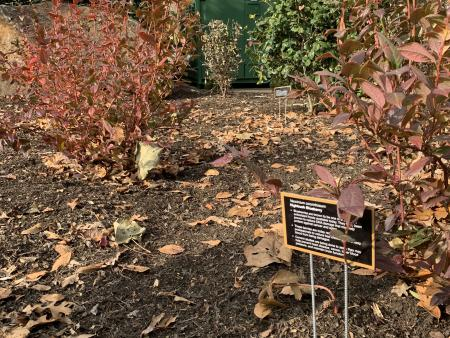 Apothecary Garden Signs Rockwood